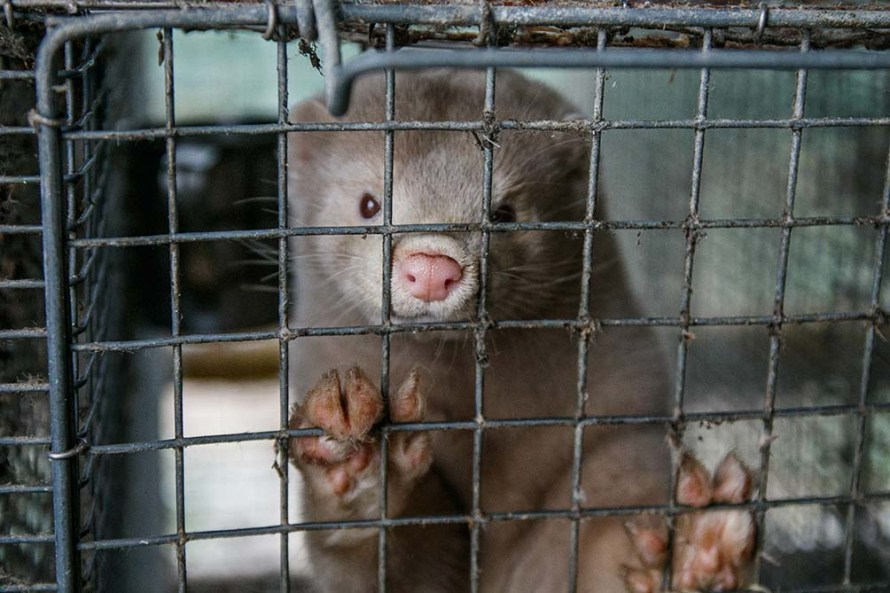 mink farms