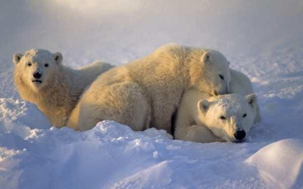 Ways Winter Animals Christmas Kathleen Prasad' Animal Reiki