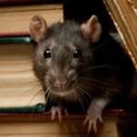 rat removal charlottesville va