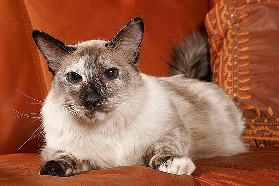 Katzen fr Allergiker  Katzenallergie  was tun