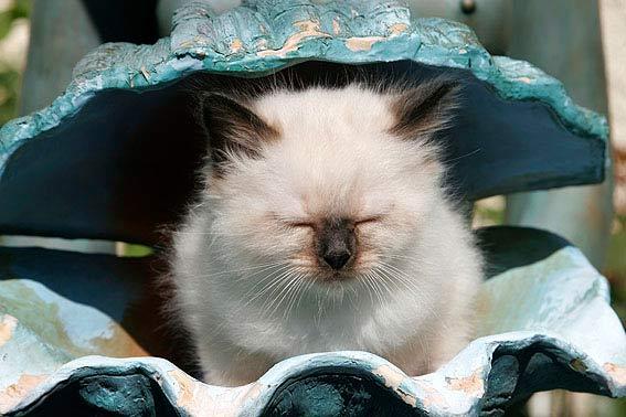 Lustige Katzenbilder mit witzigen Sprchen zum Lachen