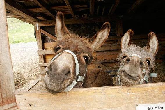 Lustige Tierbilder  Tierfotos zum Lachen