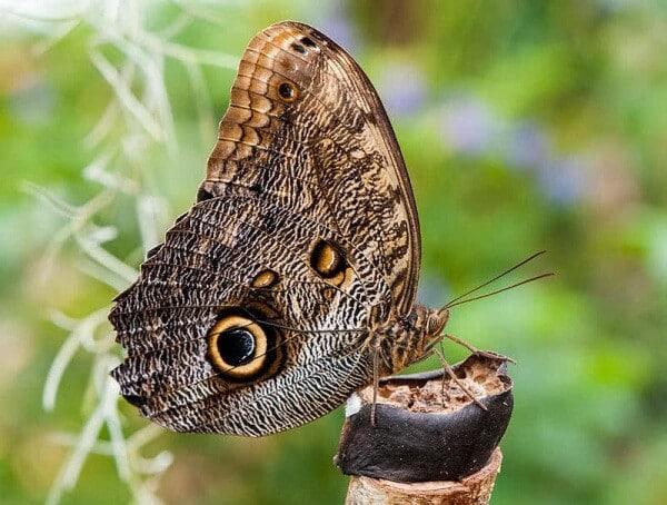 انواع الفراشات واسمائها عالم الحيوانات
