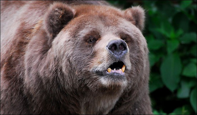 Grizzly Bear 1 The 10 Most Horrific Animals That Scare People