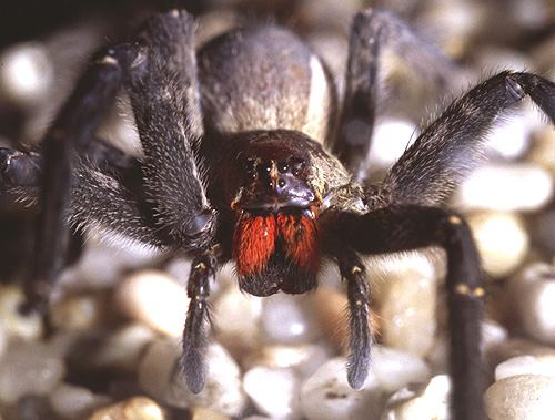 Spider 1 The 10 Most Horrific Animals That Scare People