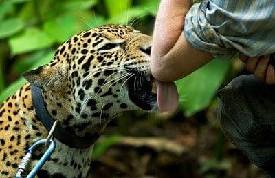 Cat Animal Wallpaper Beast As Pet Animals Zone