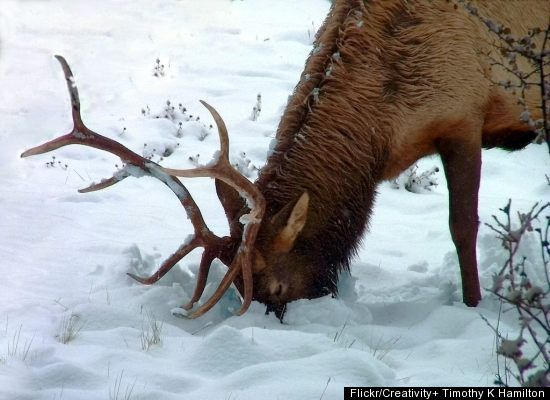 How Animals Finding Food In The Winter  Animals Zone