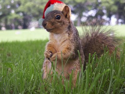 Merry Chrstimas To All The Animals 14 Merry Christmas To All The Animals
