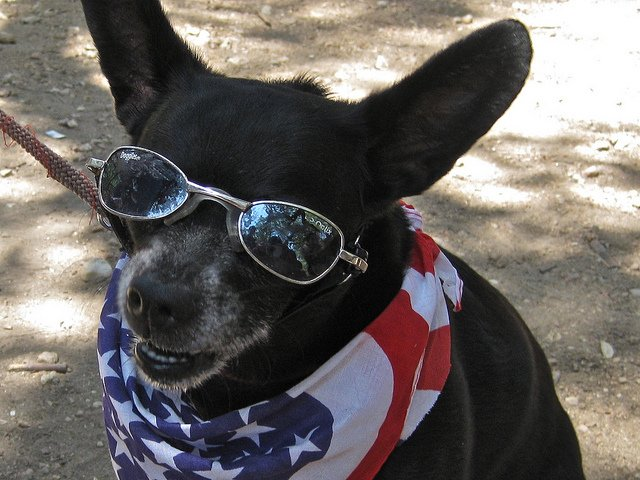 Image result for red white and blue dog