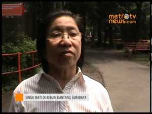 Liang Kaspe, interviewed on local TV after the lion Michael was found hanged.