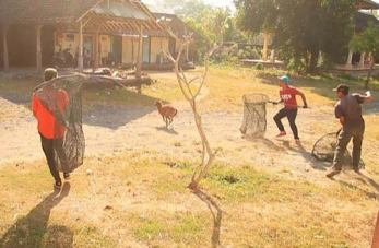 Bali dogcatchers at work. These appear to be catching dogs for vaccination. (BAWA)