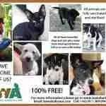Bali governor Pastika invites public to kill dogs