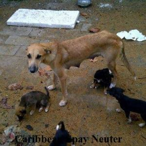 (Caribbean Spay-Neuter photo)