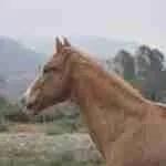 Sundance (horse)