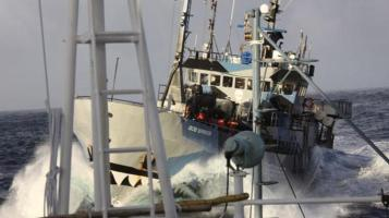 The Sea Shepherd Conservation Society vessel Bob Barker at work during the winter of 2013-2014. (SSCS photo)