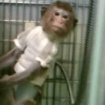 "Leading monkey lab accused of ""fatal negligence"""