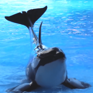 (SeaWorld photo)