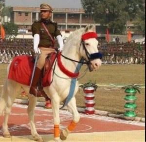 Shaktiman on a ceremonial occasion circa 2009.