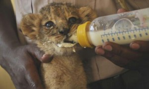 Scene from the Kenya Wildlife Service's Wild Animal Orphanage at Nairobi National Park. (KWS photo)