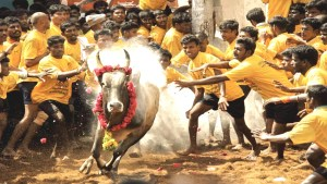 Jallikattu. (YouTube image)