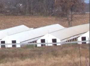 Fur farm. (Wikipedia photo)