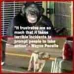 Pit bulls & the humane community