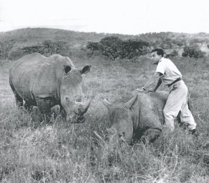 Ian Player with rhinos circa 1960.