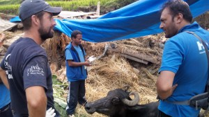 """Photograph described by G.P. """"Uttam"""" Dahal as """"Mirror pose from Khageswor Sharma Bhattarai, director of HART, and Ben Brown, VMD from World Veterinary Services, discussing treatment of pregnant buffalo with backbone injury at Churetaar, Kuil, Sindhupalchowk."""""""