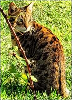 Anacortes cat