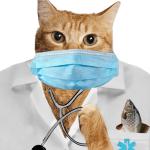 Cat studies shortchange disabled U.S. veterans & vanishing Aussie wildlife