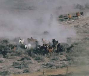(American Wild Horse Protection Campaign photo)
