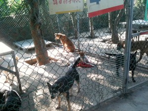 Inside the Animals Taiwan shelter.  (Animals Taiwan photo)