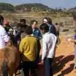 Donkeys,  mules,  & ponies struggle to survive Kathmandu brickyards