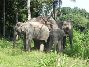 Boon Lott's Elephant Sanctuary herd.  (Elephant Aid International photo)