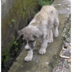 Dog-eating,  dogfighting,  & corruption feed recurring rabies outbreaks in Bali