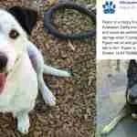 Albuquerque city shelter released dangerous dogs