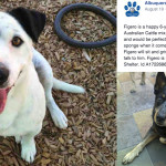 Albuquerque city shelter released dangerous dogs