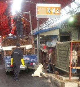 KAPCA in February 2014 tried unsuccessfully to close this dog slaughterhouse in Busan, South Korea. (KAPCA photo)