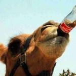 Tulum Monkey Sanctuary founder Richard Mileski killed by camel