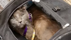 Cat in carrying case