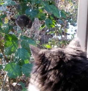 Cat watching rat. (Beth Clifton photo)