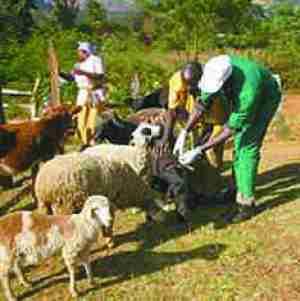 vaccination livestock Kenya