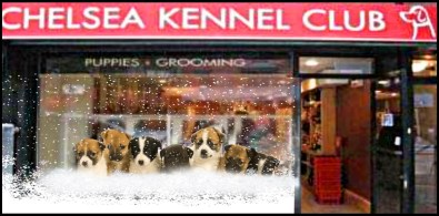 Chelsea Kennel Club in NYC