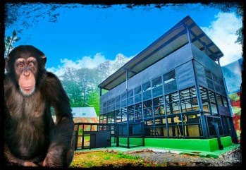 Chimpanzee villas