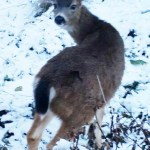 Scientist sparked revolution in deer management