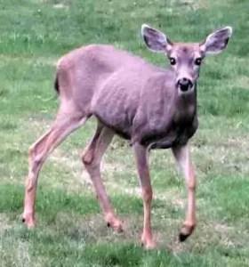 Deer starts to run
