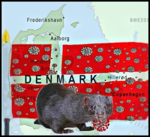 Denmark map with mink and covids