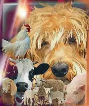 Dog, cat, cow, sheep, goat, pig