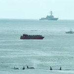 U.S. Navy agrees to blow up & deafen fewer whales