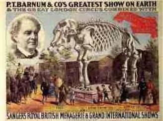When elephants died, P.T. Barnum exhibited their bones.